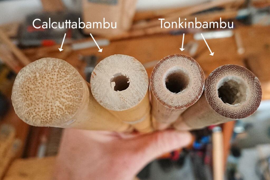 Calcuttabambu är oftast massiv eller har väldigt tjocka cellväggar, medan Tonkinbambu alltid är ihålig med väggar som varierar i tjocklek.